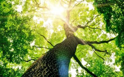 abattage-arbre-76