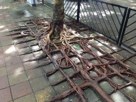 racines eau 3