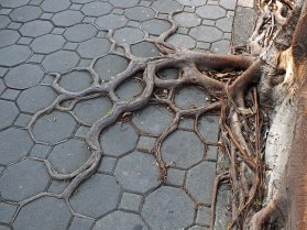 racines eau